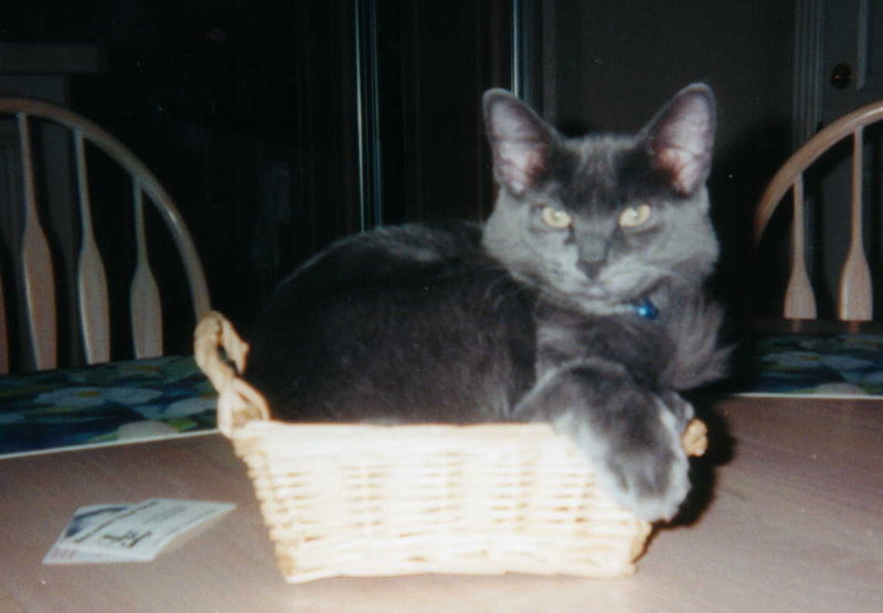 basket-kitty |